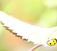 Juvenile Ladybird by missmoneypenny
