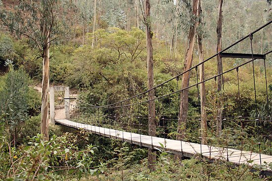 Suspended Bridge Over a Canyon by rhamm