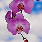 Orchid Sky - Photographic Print by Jean-Pierre Mouzon