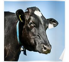Black Cow Poster