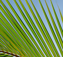 Palm Leaf by visualspectrum