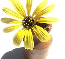 Yellow Daisy by Ransley