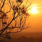 Sunset through the trees by HGMAGGIE
