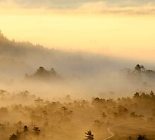 3.9.2013: Morning in Torronsuo National Park III by Petri Volanen