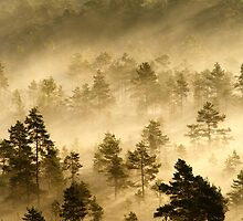 3.9.2013: Morning in Torronsuo National Park V by Petri Volanen