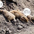 Prairie Dogs by Andrew Robinson