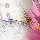 Garden Fairy (Pieris rapae) by Alex Ford