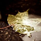 Maple leaf in a puddle by Alex Volkoff