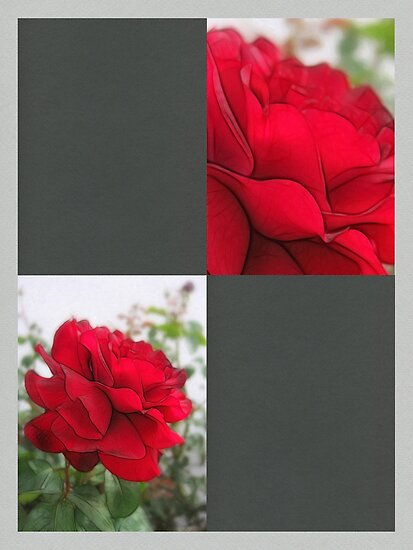Red Rose Edges Blank Q6F0 by Christopher Johnson