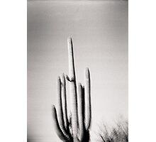 Saguaro Holga Photo Photographic Print