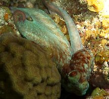 Green and Red Caribbean Octopus on Coral Reef by Amy McDaniel