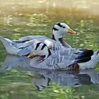 Bar Headed Geese by Paul Spear