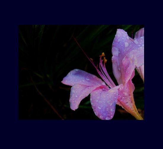 Naked Lady Flower in the Dark by ItsAnOddWorld