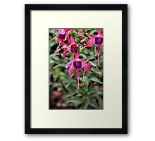 A buzz in the air Framed Print
