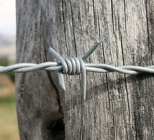 Barbed Wire by rhamm