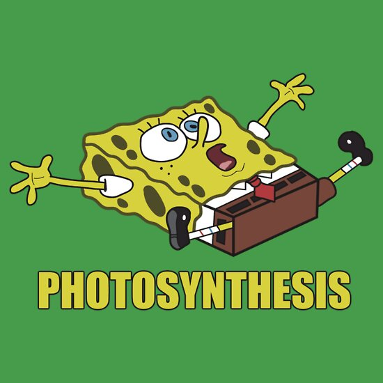 photosythesis for children