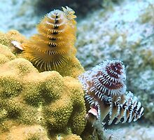 Pair of Colorful Christmas Tree Worms by Amy McDaniel