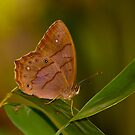 butterfly and bamboo leaves by davvi