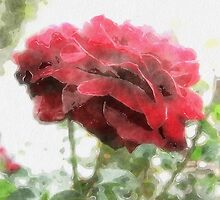 Red Rose with Light 1 Watercolor by Christopher Johnson