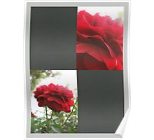 Red Rose with Light 1 Blank Q6F0 Poster