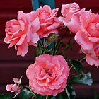Beautiful Roses by VJSheldon