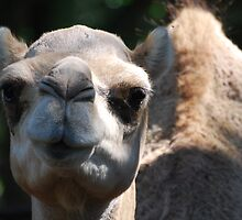 Guess What Day It Is by Ron Hannah