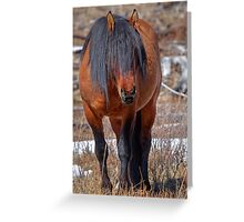 Shaggy Stallion Greeting Card