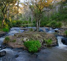 Spring Creek above Queen Mary Falls.  by Ian Hallmond