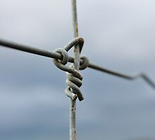 Wire Fence by Ransley