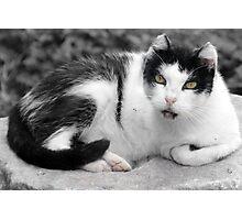 Hail, Caesar Cat of Torre Argentina Photographic Print