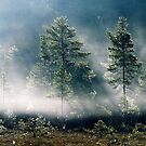 5.9.2013: September Morning II by Petri Volanen