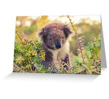 Koala in the Front Yard Greeting Card