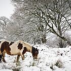 Horse in Snow by Heidi Stewart