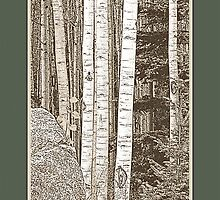 Aspen Grove (Sepia, Green Border) by Hannelore Dean
