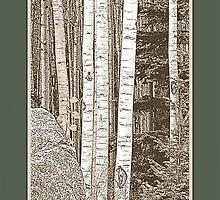 Aspen Grove (Sepia, Green Border) by Hannelore Dean