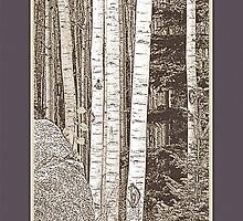 Aspen Grove (Sepia, Plum Border) by Hannelore Dean