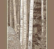 Aspen Grove (Sepia, Brown Border) by Hannelore Dean
