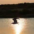Seagull in the Light by virginian