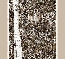 Aspens (Sepia) by Hannelore Dean