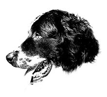 Happy Retriever Dog Digital Engraving by digitaleclectic