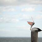 ha ha ha - laughing pelican by Jenny Dean