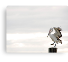 Pelican Dance Canvas Print