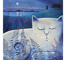 Blind white cat on a moonlit night. Photographic Print