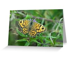 Wall Brown Butterfly Greeting Card