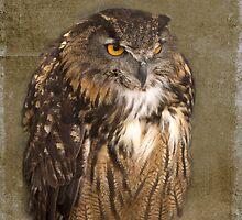 Grumpy Owl by Rebecca Cozart