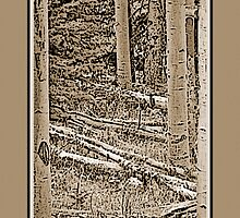 Autumn Aspens (Sepia) by Hannelore Dean