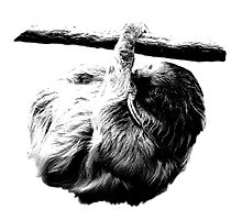 Sluggish Sloth. Digital Wildlife Engraving Image by digitaleclectic