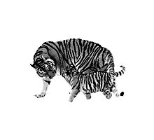 Playful Tigers. Mother and Cub. Wildlife Digital Engraving Image Photographic Print