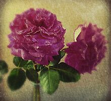 Faded Roses by Janet Clark