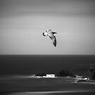 Fly High by Svetlana Sewell
